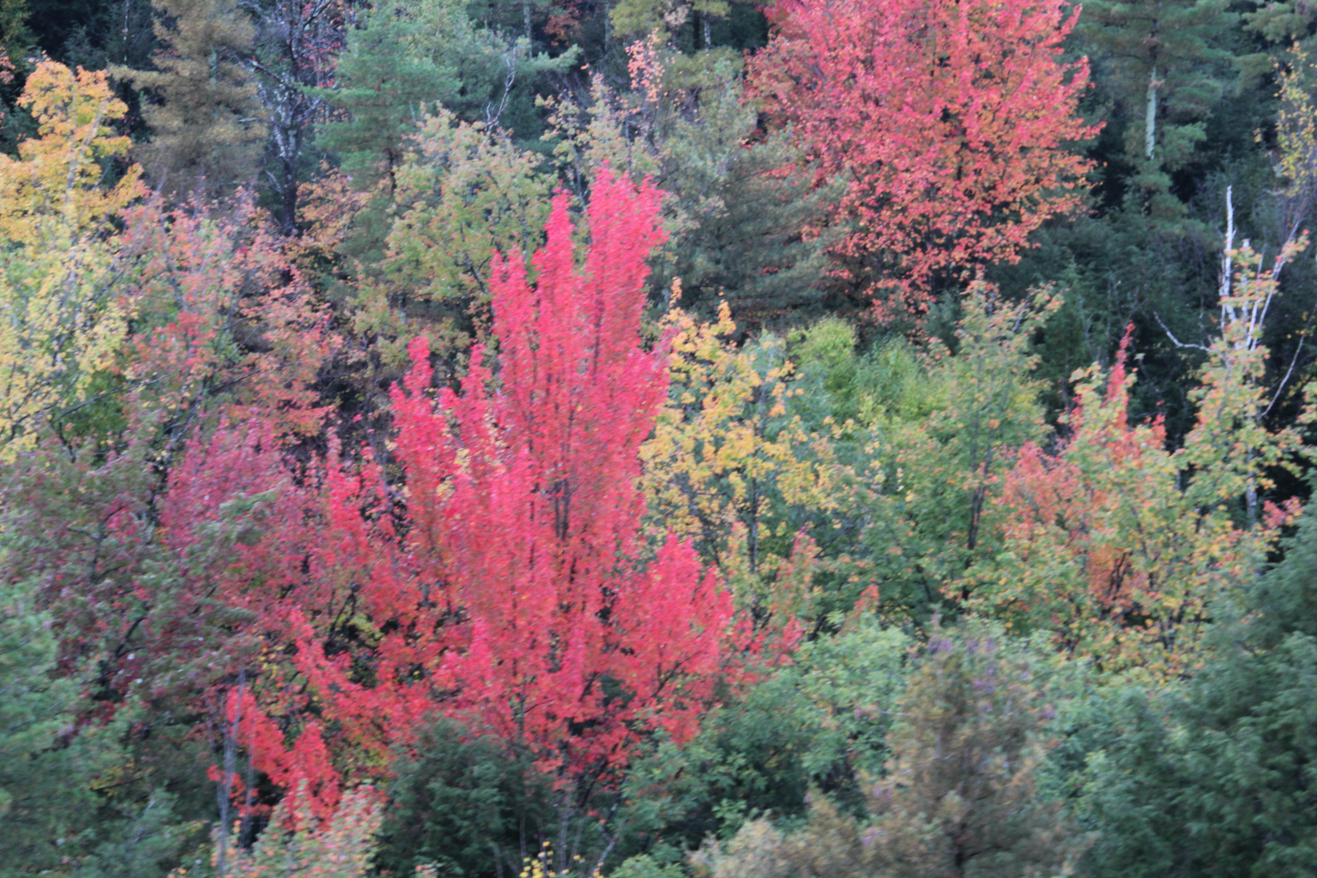 Pre Scout Your Destination For Peak Foliage Time As It Differs From Year To Year Weather Com Has A Peak Fall Foliage Map For The Us Here